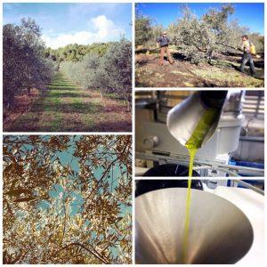 Huile d'olive BIO AOP